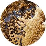 日本バチはちみつ