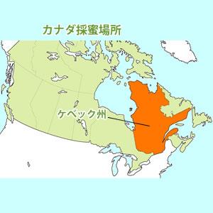 カナダ・ブルーベリー蜜